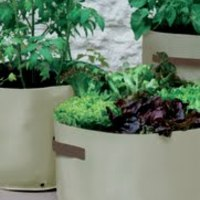 Page_651609211788_vegetable_planters_2009