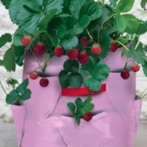 Product_strawberry_patio_planters_on_patio_09
